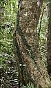 2012-11-xx-Australia-Flora-1621-RainForest-_MG_4121.jpg