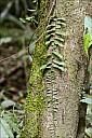 2012-11-xx-Australia-Flora-1723-RainForest-_MG_4193.jpg