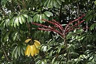 2012-11-xx-Australia-Flora-1925-RainForest-_MG_4223.jpg