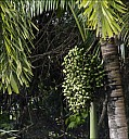 2012-11-xx-Australia-Flora-2026-RainForest-_MG_3916.jpg
