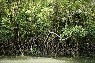 2012-11-xx-Australia-Flora-2237-River-_MG_2456.jpg