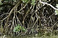 2012-11-xx-Australia-Flora-2439-River-_MG_5700.jpg