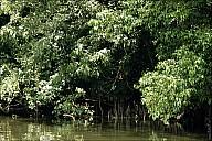 2012-11-xx-Australia-Flora-2541-River-_MG_2394.jpg