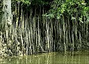 2012-11-xx-Australia-Flora-2642-River-_MG_5122.jpg
