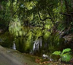 2012-11-xx-Australia-Flora-273134-52a-abc.jpg: 1352x1200, 1071k (2016-12-11, 11:31)