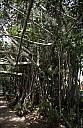 51-Kuranda-2917.jpg