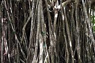 53-Kuranda-2916.jpg