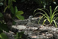 043-Mangrove-_MG_4387-abc.jpg