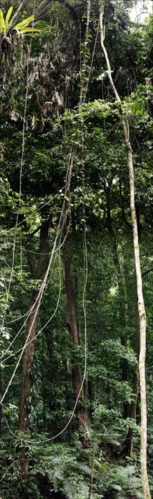 12-RainForest-_MG_4159-69-abc.jpg: 221x720, 158k (2013-01-07, 19:42)