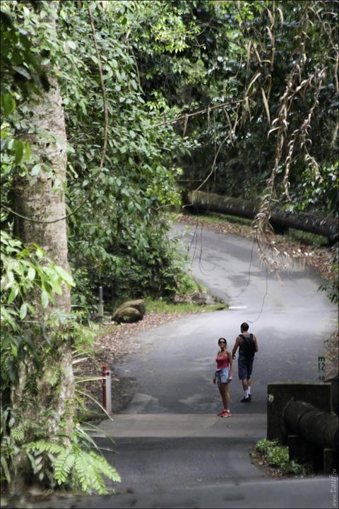41-RainForest-_MG_4202-abc.jpg: 480x720, 229k (2013-01-07, 19:43)