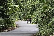 03-RainForest-_MG_4012.jpg