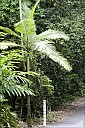 04-RainForest-_MG_4019.jpg