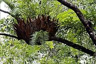 15-RainForest-_MG_4022.jpg