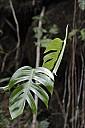 17-RainForest-_MG_4203.jpg
