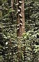 18-RainForest-_MG_4028.jpg