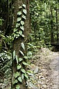19-RainForest-_MG_4206.jpg