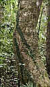 21-RainForest-_MG_4121.jpg