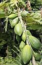 28-RainForest-_MG_3920.jpg