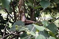 36-RainForest-_MG_4218.jpg