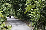 39-RainForest-_MG_4210.jpg