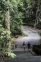 40-RainForest-_MG_4200.jpg