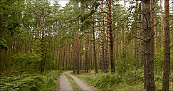 Forest-12_MG_1753-57.jpg
