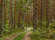 Forest-14_MG_9276-79.jpg