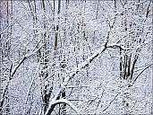 2018-12-11-winter-02-110006.jpg