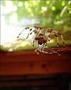 2020-08-02-Spider-01-8020937.jpg