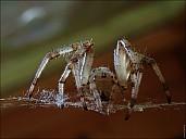 2020-08-02-Spider-02-8020964.jpg