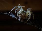 2020-08-02-Spider-03-8020999-abc.jpg: 1599x1200, 287k (2020-08-15, 12:45)