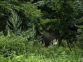 2020-07-30-Kolomenskoe-July-05-7300785.jpg