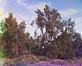 20025u.jpg