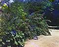 20065u.jpg