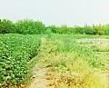 20073u.jpg