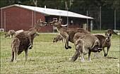 2012sel-Australia-37.jpg: 950x588, 254k (2013-11-06, 20:35)