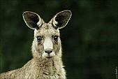 2012sel-Australia-40.jpg: 950x634, 202k (2013-11-06, 20:35)