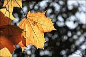 2011-10_08Fall_20_IMG_6766-abc.jpg: 1000x668, 185k (2013-11-06, 20:28)